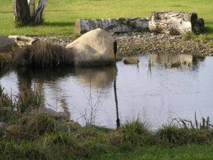 Projekt oczka wodnego i stawu kąpielowego